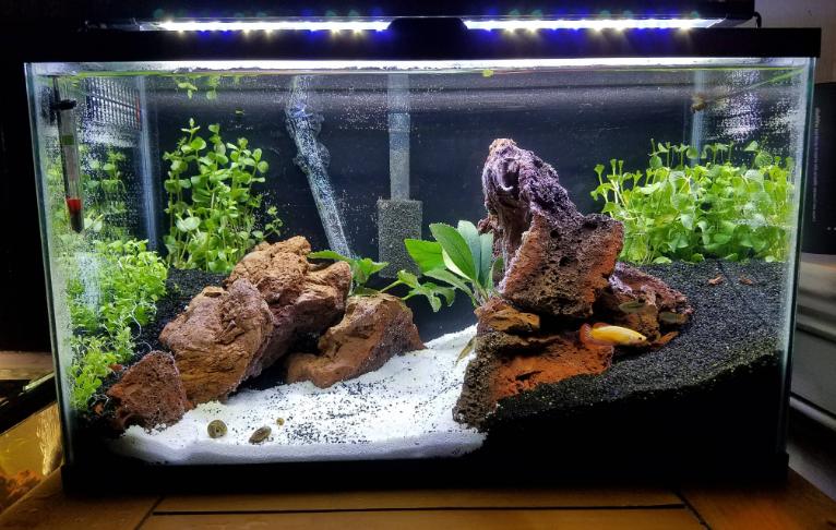 10_gallon_fish_tank