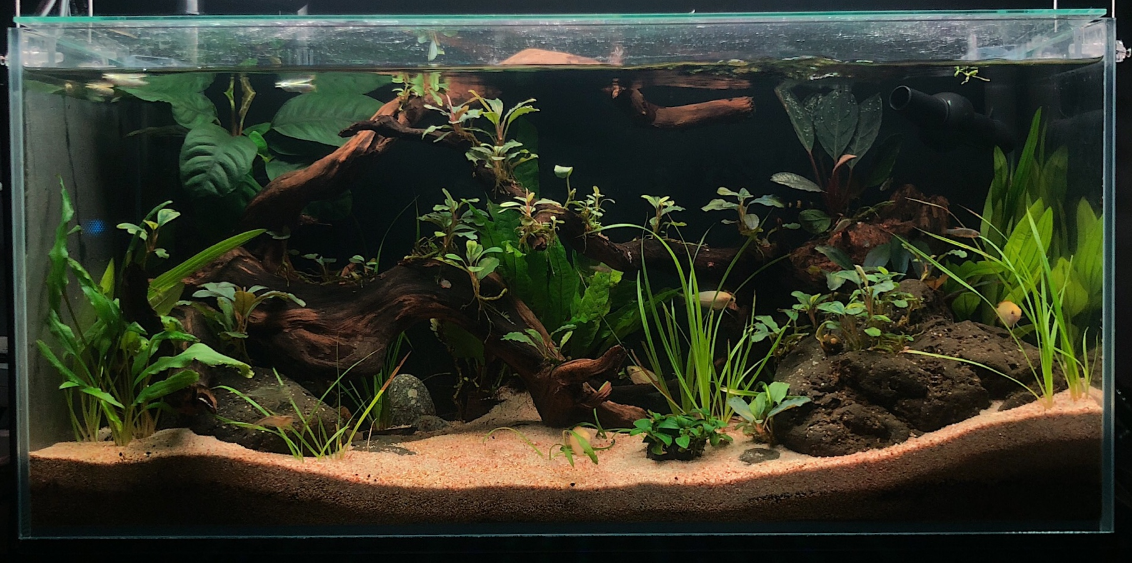 10_gallon_fish_tank_filter