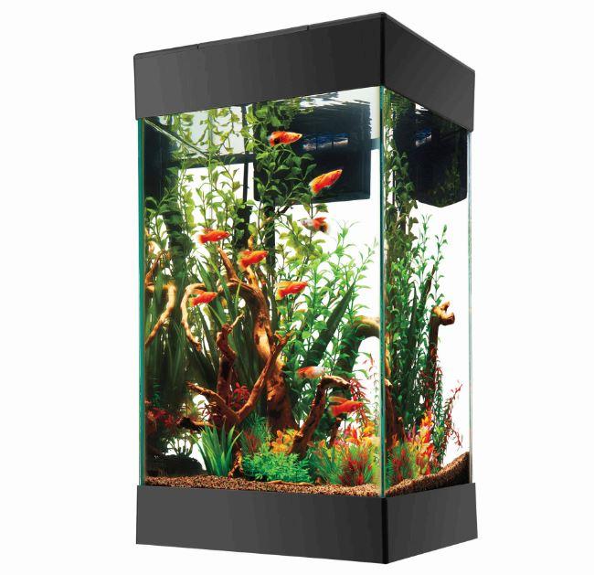 Best 15 Gallon Fish Tank Aquarium Reviews And Setup Ideas
