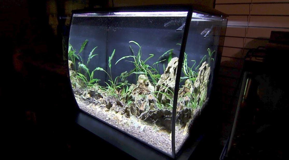 15-gallon-fish-tank-fluval-flex