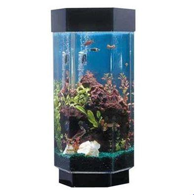 15-gallon-hexagonal-fish-tank