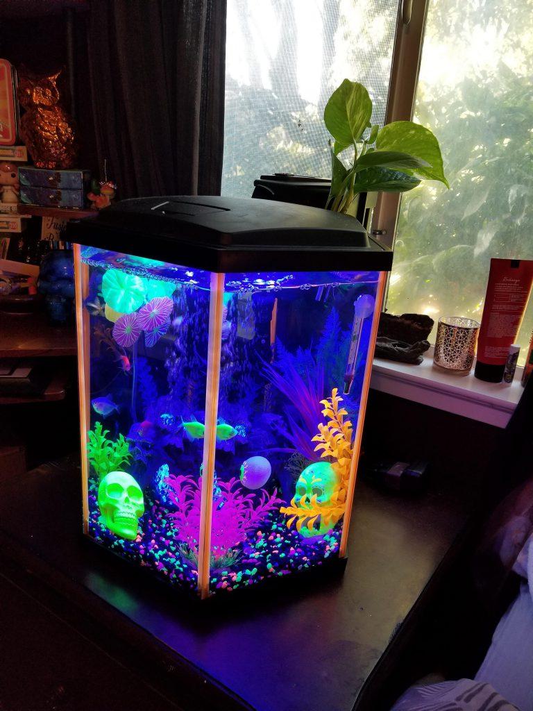 glofish_aquarium