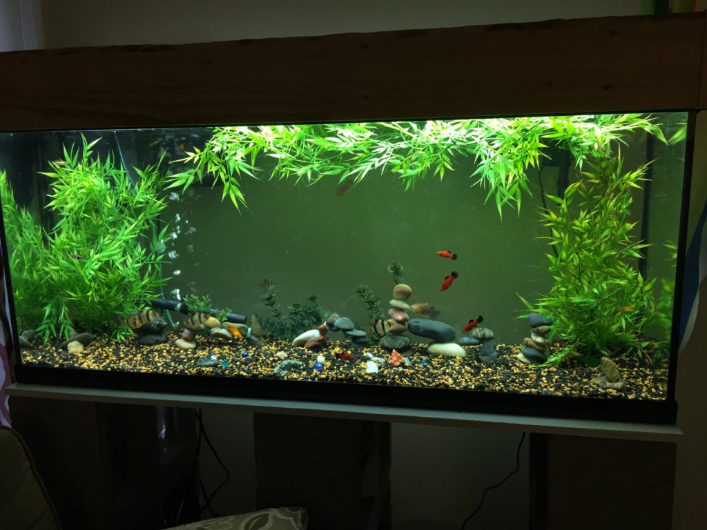 55_gallon_aquarium
