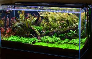 55_gallon_aquarium