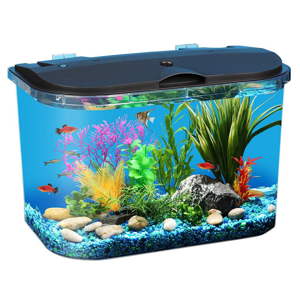 5_gallon_aquarium