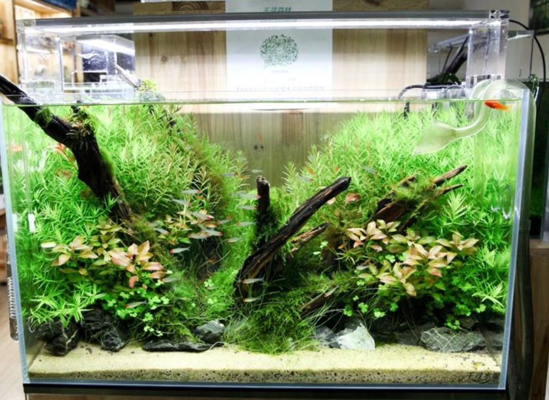 Best_Led_Lights_for_Planted_Tank