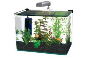 Penn_Plax_curved_corner_glass_aquarium_kit