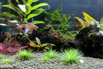 foreground-aquarium_plants