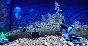 aquarium_decorations