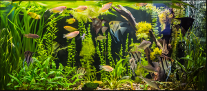 aquarium_heater