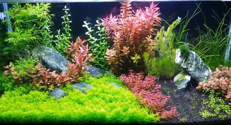 aquarium_light