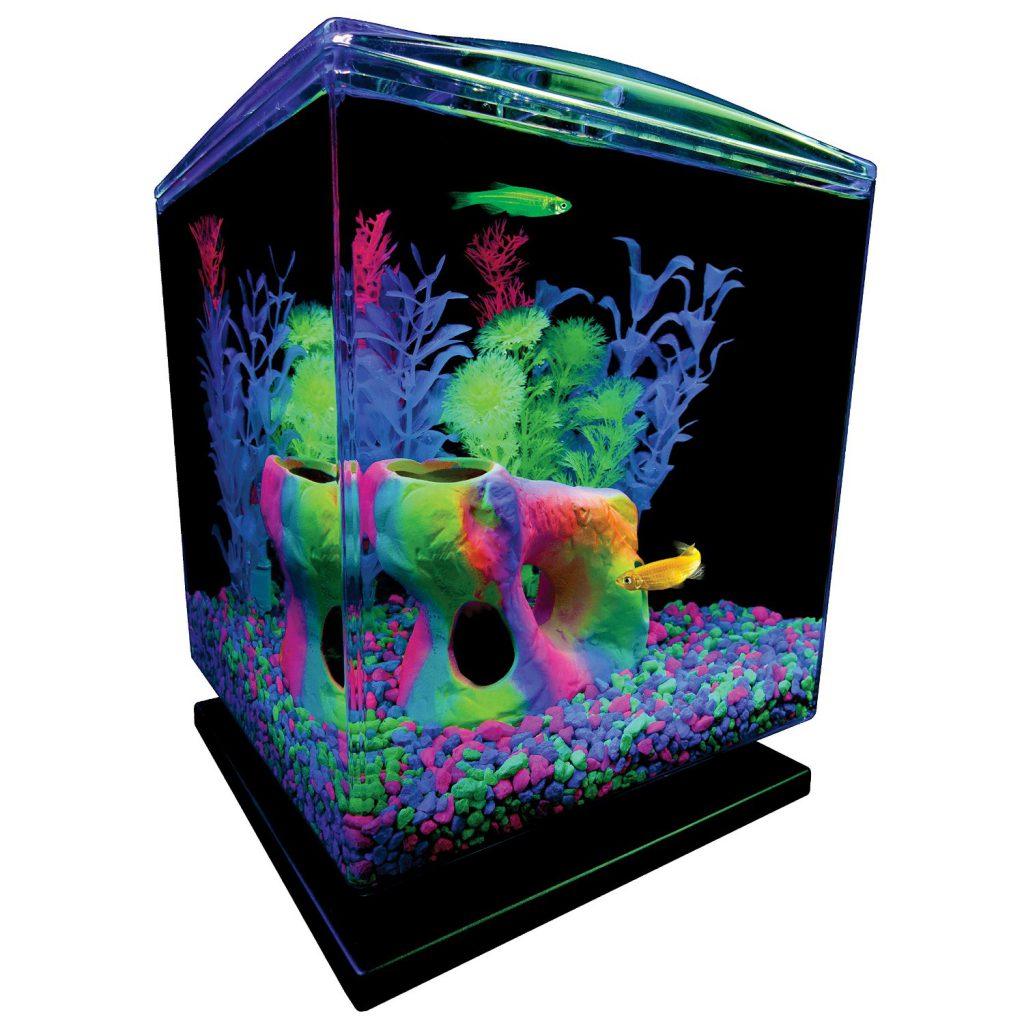 glofish_aquarium_tank