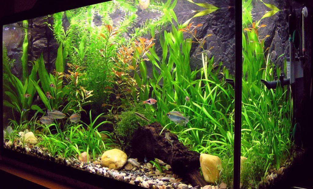 best_aquarium_heater