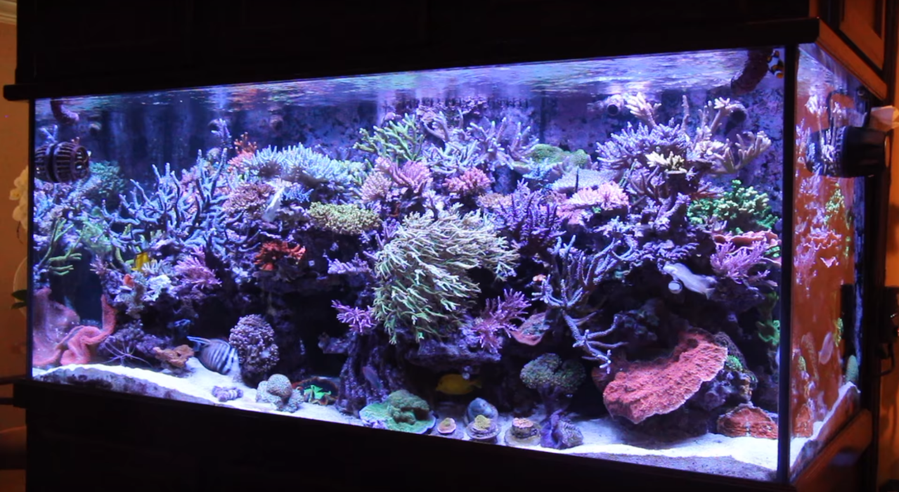 how_clean_a_fish_tank