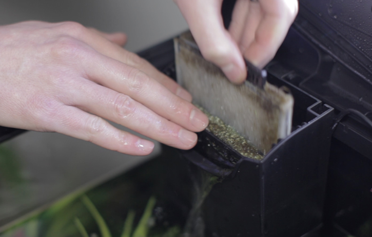 how_to_clean_fish_tank_filter