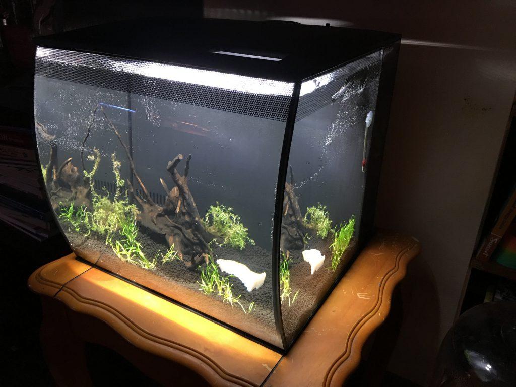 fish_tank