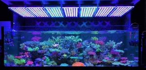fish_tank_led_lights