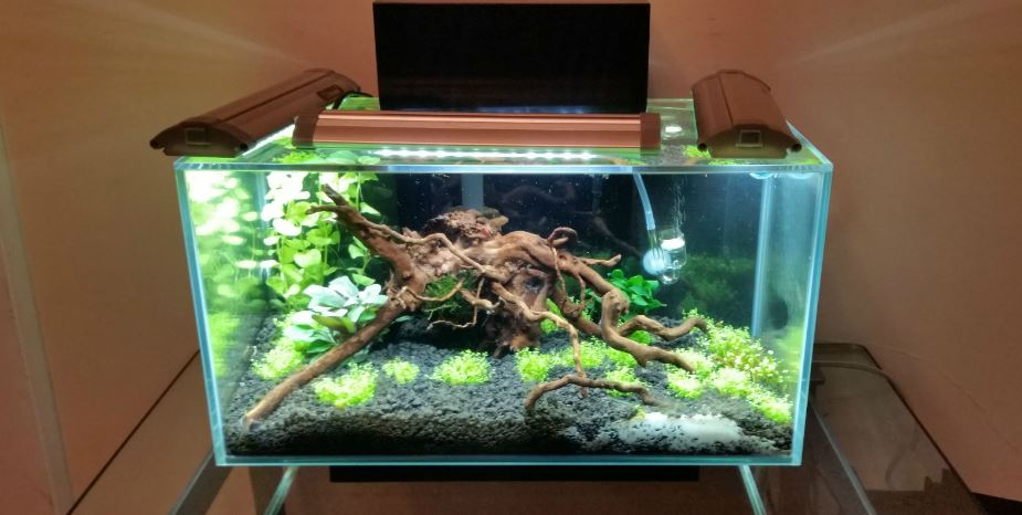 fluval_edge_6_gallon