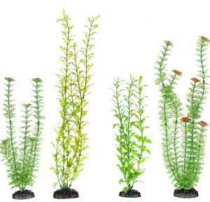 freshwater-aquarium-plants-beginners