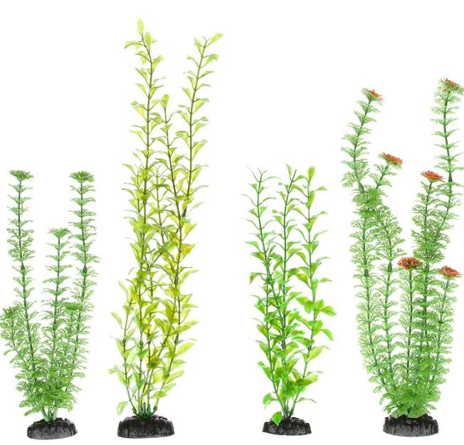 freshwater-aquarium-plants-beginners