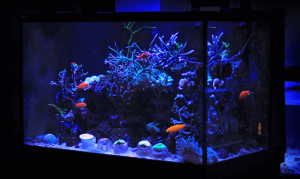 3_gallon_fish_tank