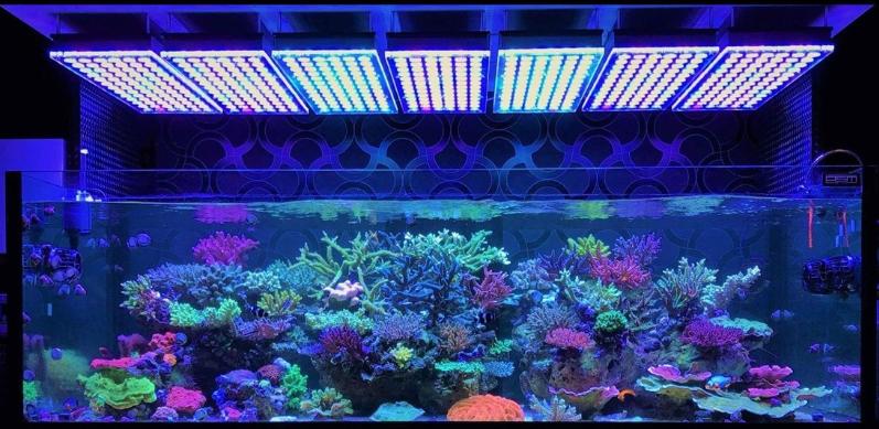 led_light_aquarium