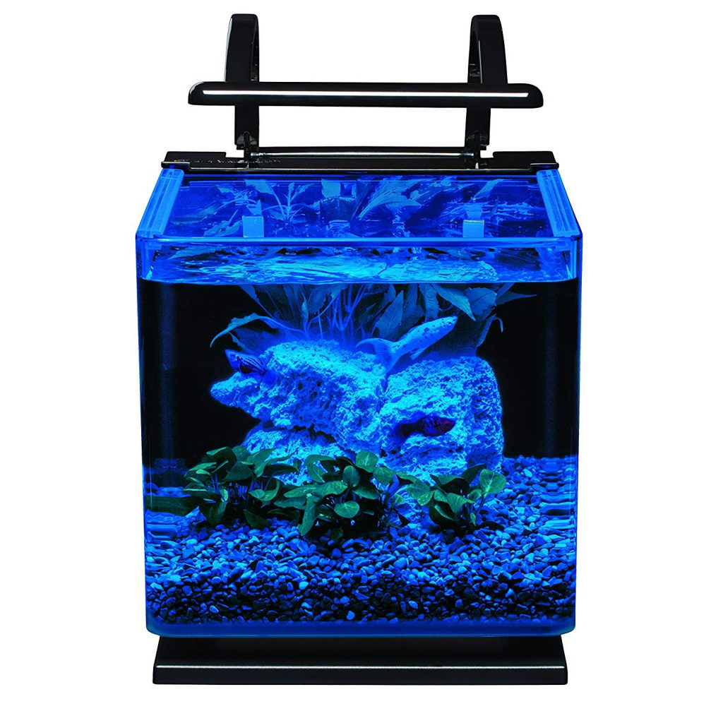 3_gallon_aquarium