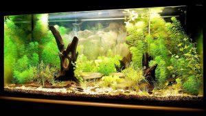 fish_tank_setup