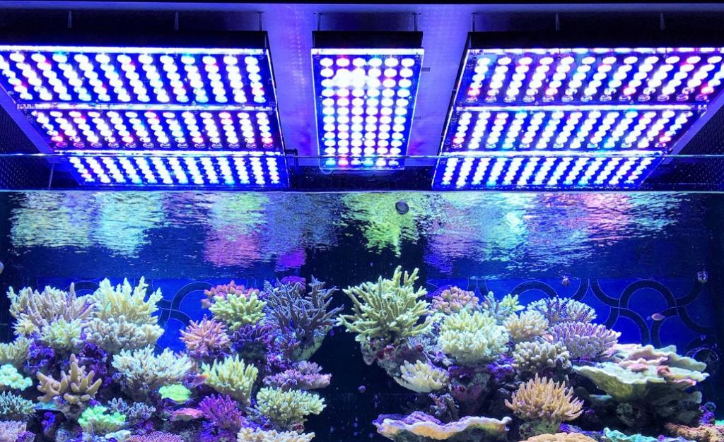 reef_aquarium_lights