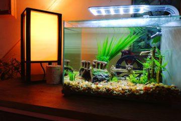 how_clean_a_betta_fish_tank