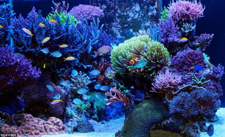 saltwater_aquarium_heater