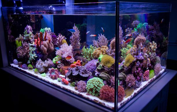 saltwater_aquarium_tank