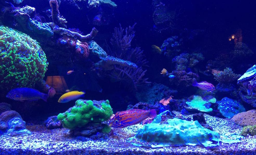 saltwater_tank