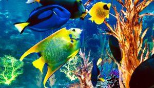 fish_diseases