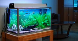 small_fish_tank