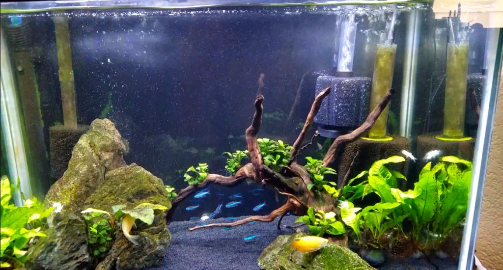 sponge_filter_for_fish_tank