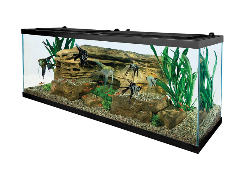 Tetra 55 Gallon Fish Tank
