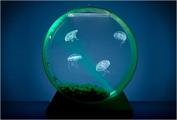 Desktop-Jellyfish-Tank