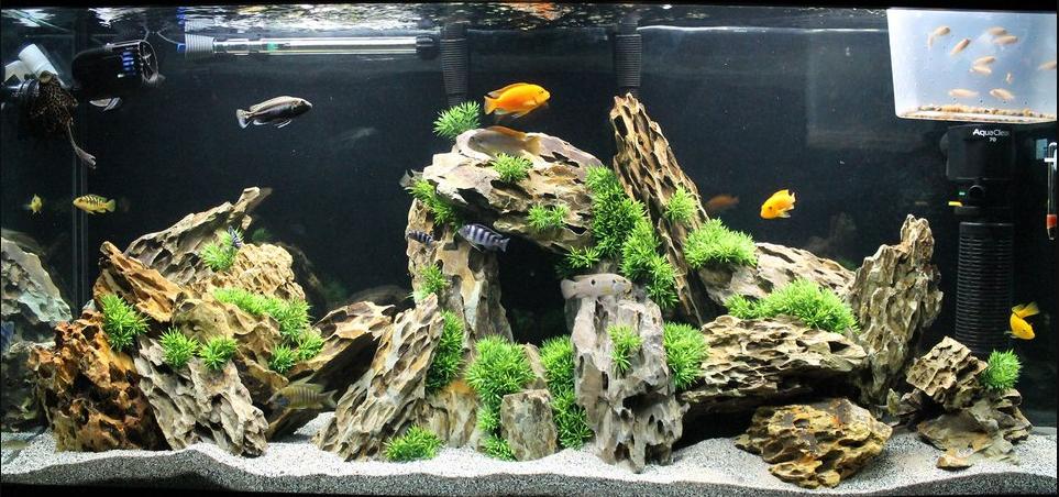 200_watt_aquarium_heater