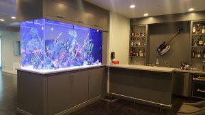 saltwater_vs_freshwater_aquarium