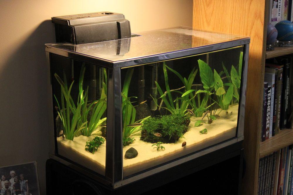20_gallon_aquarium