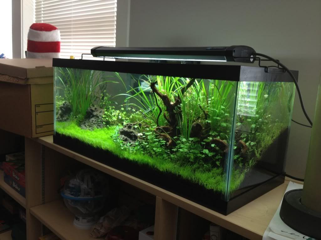 20_gallon_fish_tank