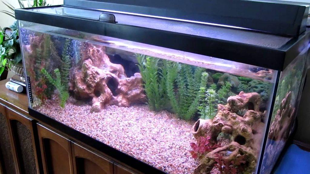 40_gallon_aquarium
