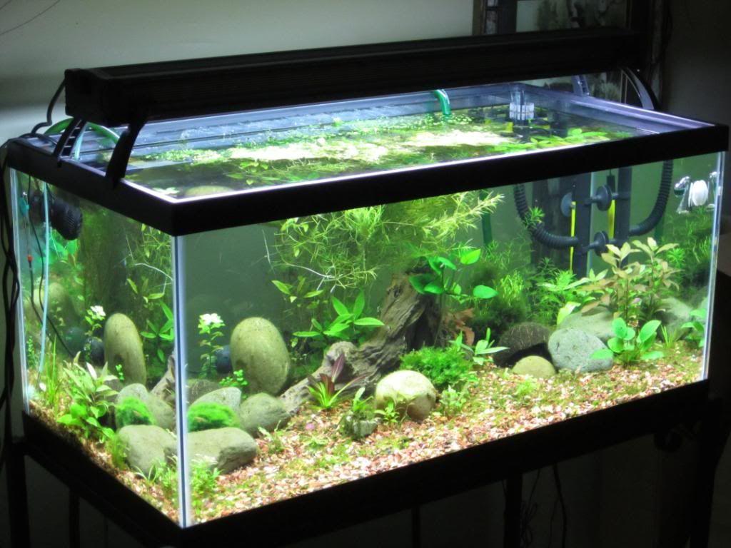 40_gallon_fish_tank