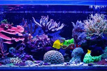 60_gallon_aquarium