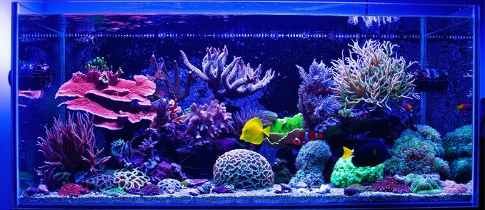 Best 60 Gallon Aquarium Reviews And Guide Setup Ideas Top Picks