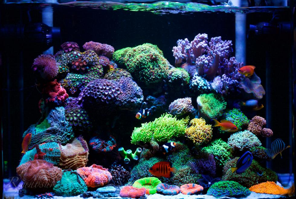 60_gallon_fish_tank