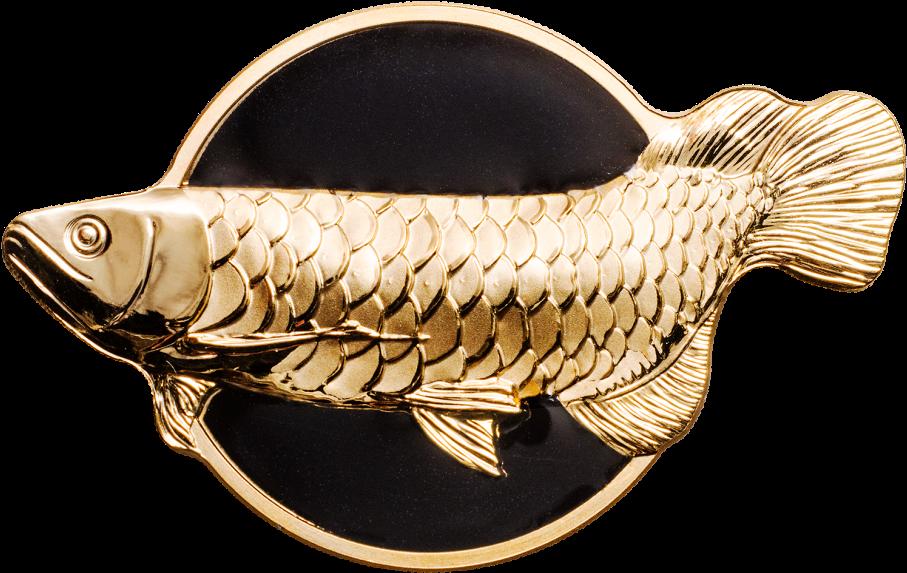 Silver Arowana Fish: Care, Behavior, Tank Size, Life, Diet Guide