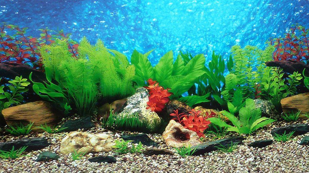 Unique Aquarium Background Themes Setup Methods Ideas