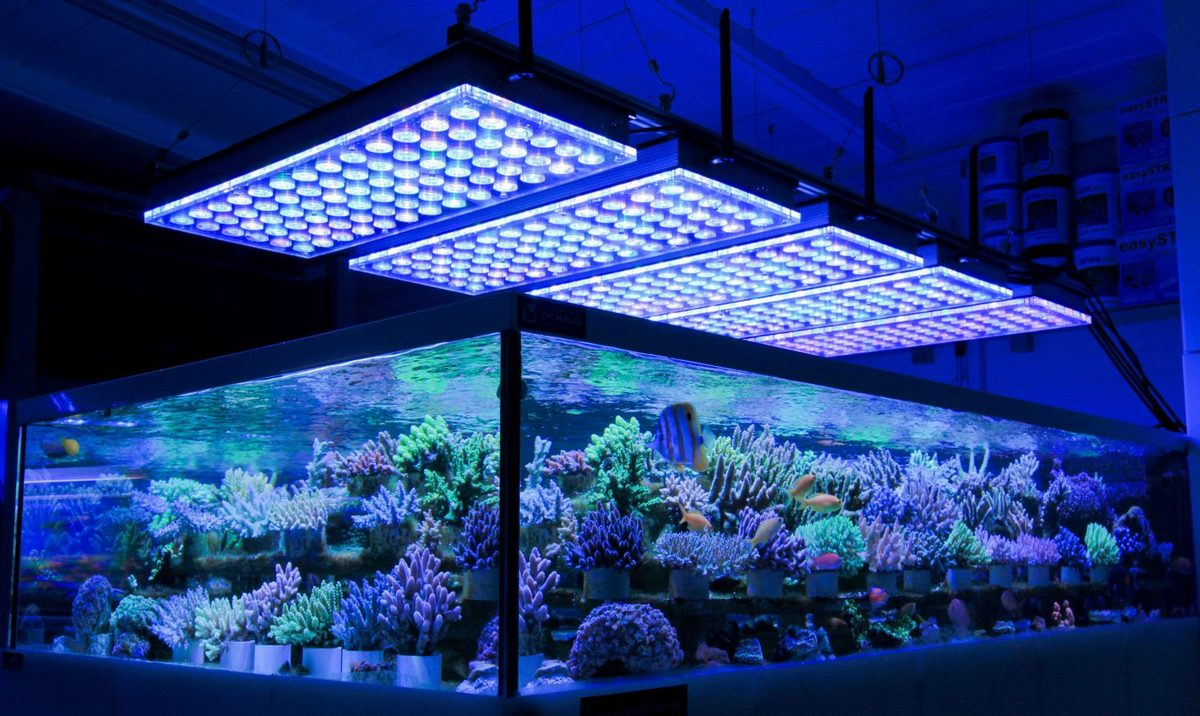 36-inch-led-aquarium-light